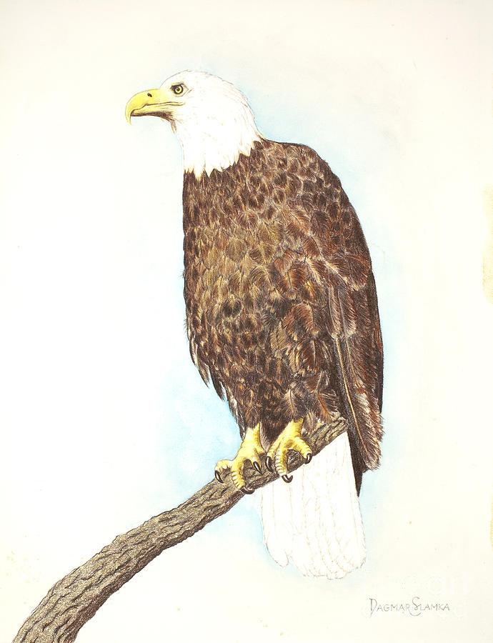 Flying Bird Painting - American Bald Eagle Watching by Dag Sla