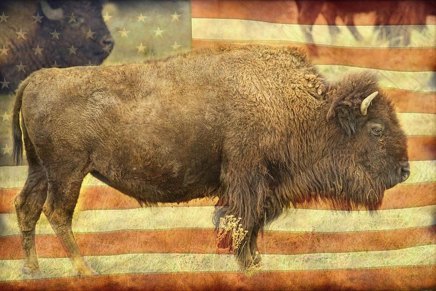 American Buffalo Photograph