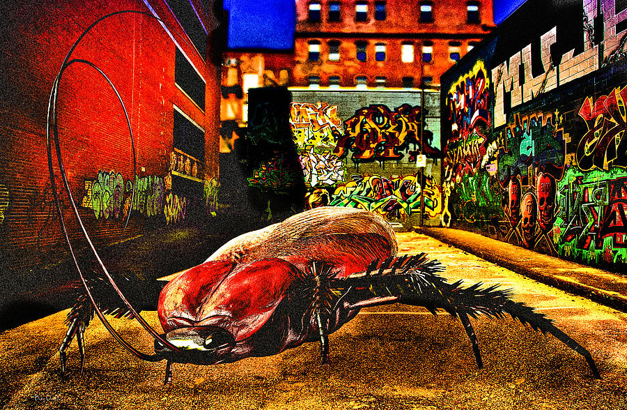 Graffiti Digital Art - American Cockroach by Bob Orsillo