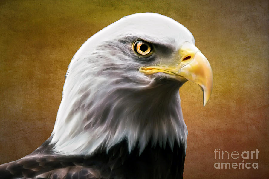 Eagle Photograph - American Eagle by Shannon Rogers