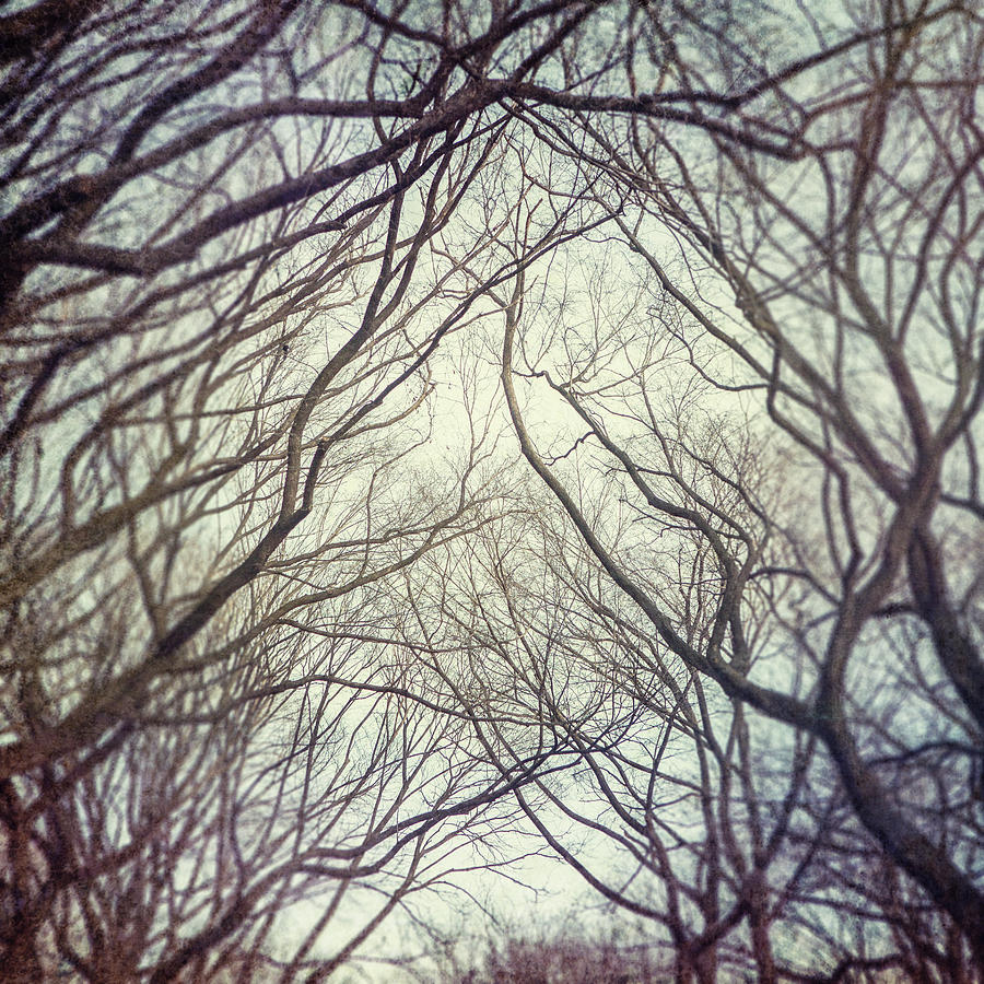 Central Park Photograph - American Elm Trees Of Central Park In New York City In Winter by Lisa Russo