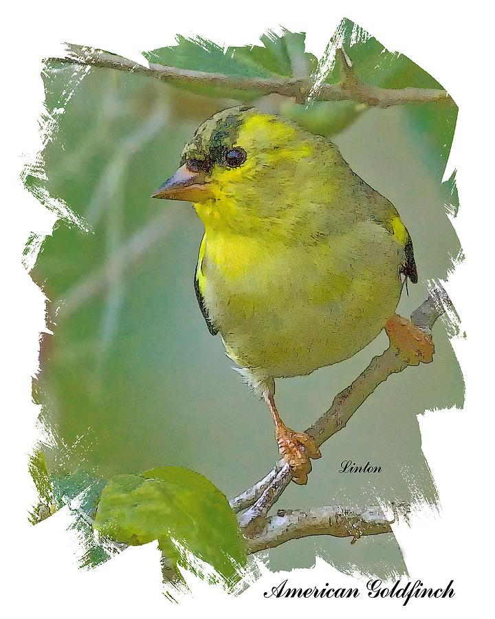 American Goldfinch Digital Art - American Goldfinch by Larry Linton