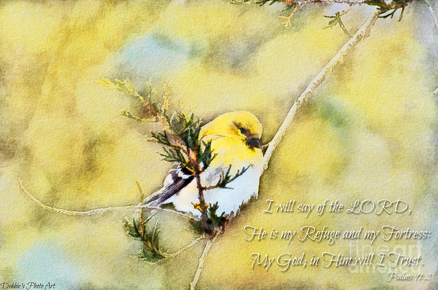 Branch Photograph - American Goldfinch On A Cedar Twig With Digital Paint And Verse by Debbie Portwood