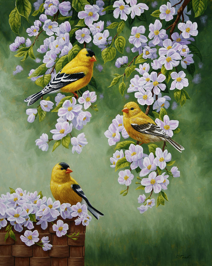 Bird Painting - American Goldfinch Spring by Crista Forest