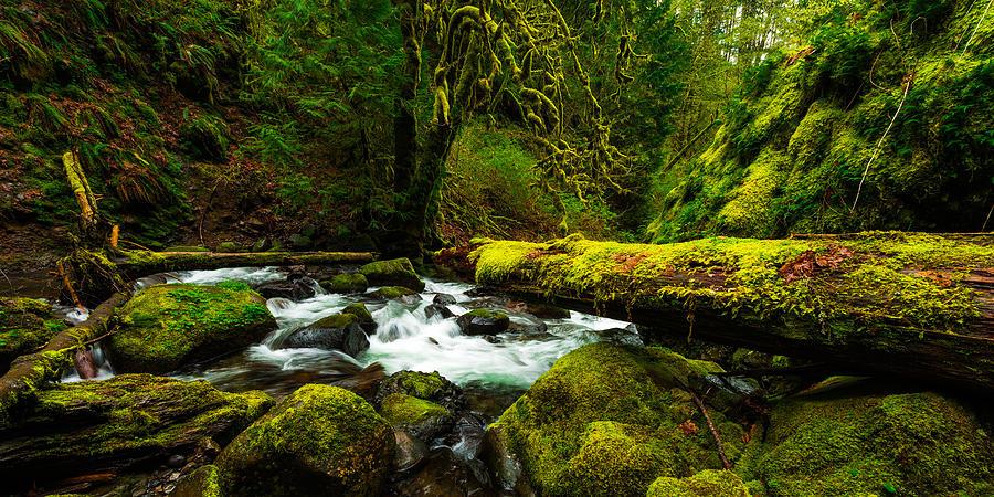 Northwest Photograph - American Jungle by Chad Dutson