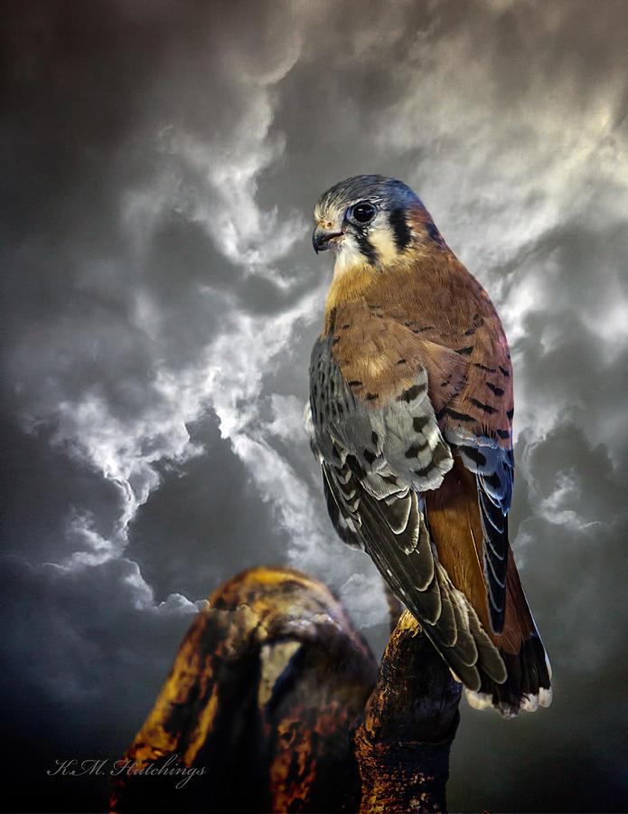 Bird Photograph - American Kestrel by Keith Hutchings