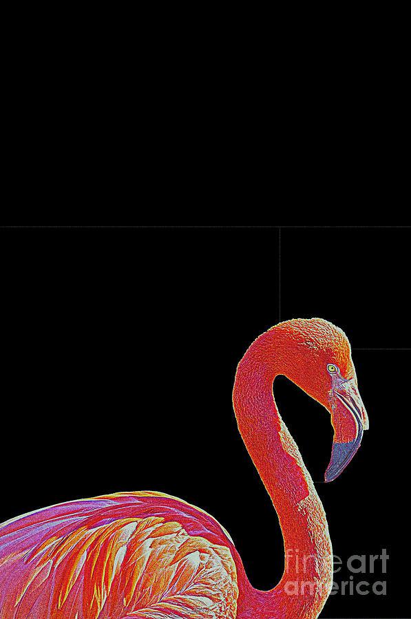 American Pink Flamingo Mixed Media