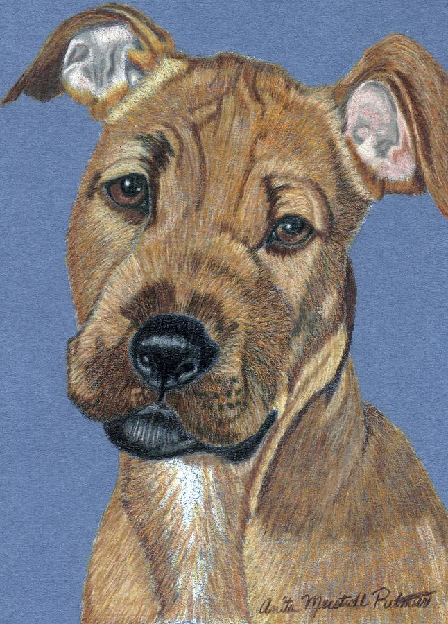 Dog Painting - American Pit Bull Terrier Puppy by Anita Putman