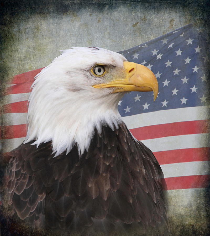 Eagle Photograph - American Pride by Angie Vogel