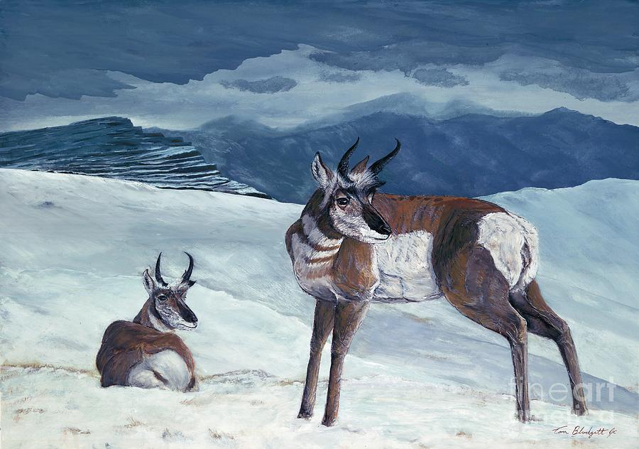 Antelope Painting Painting - American Pronghorn by Tom Blodgett Jr