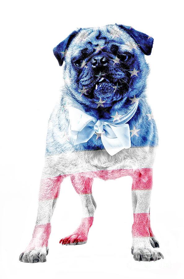 Animal Photograph - American Pug by Edward Fielding