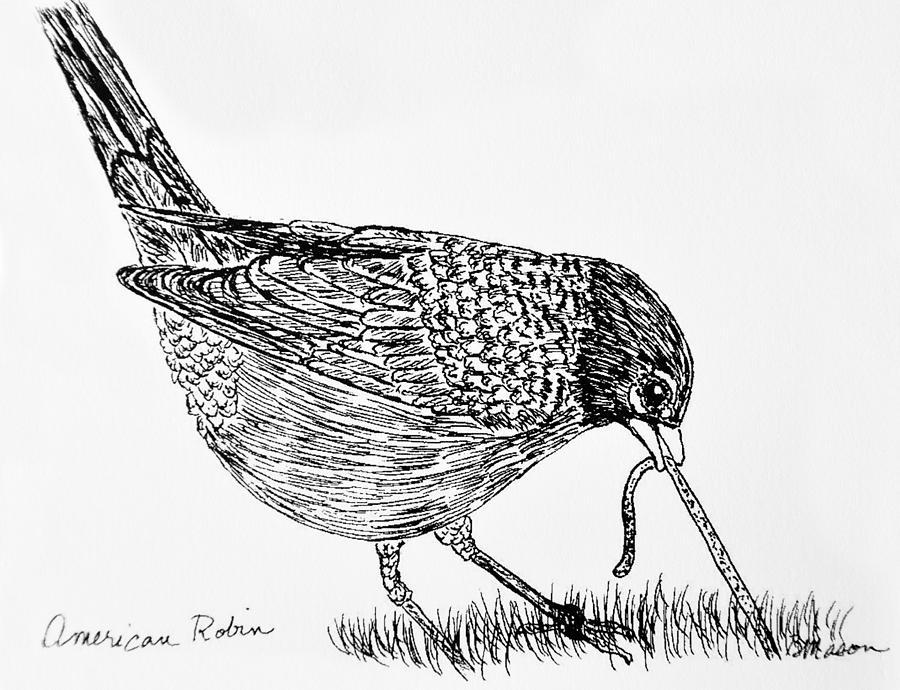 Birds Drawing - American Robin by Becky Mason