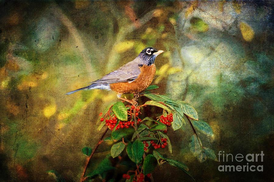 Robin Digital Art - American Robin - Harbinger Of Spring by Lianne Schneider