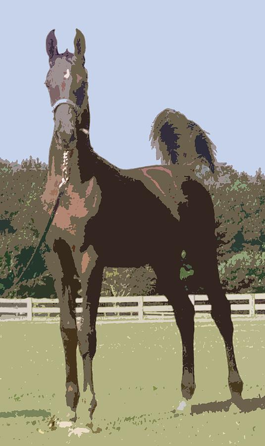 American Saddlebred Weanling   by Olde Time  Mercantile