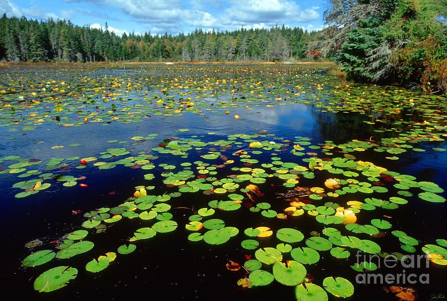 Deer Island Photograph - Ames Pond by Jim Block