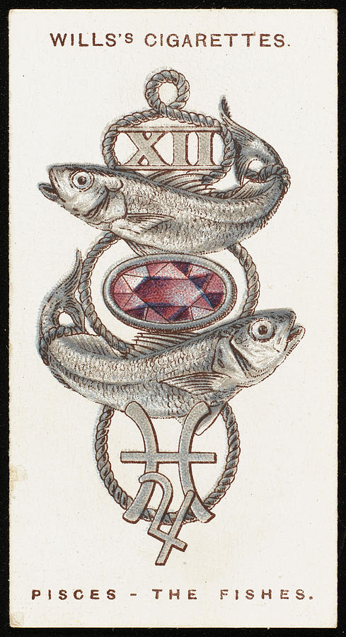 Zodiac Drawing - (amethyst)          Date 1923 by Mary Evans Picture Library