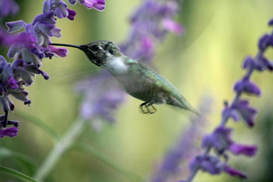 Bird Photograph - Amidst The Flowers by Wendi Matson