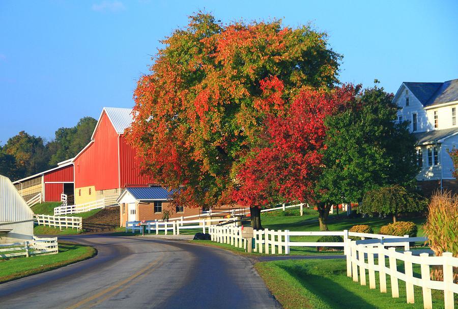 Amish Barn In Autumn Photograph