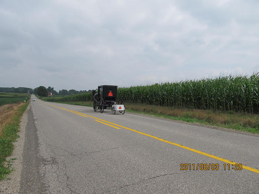 Buggy Photograph - Amish Buggy With Small Back Cab by Tina M Wenger