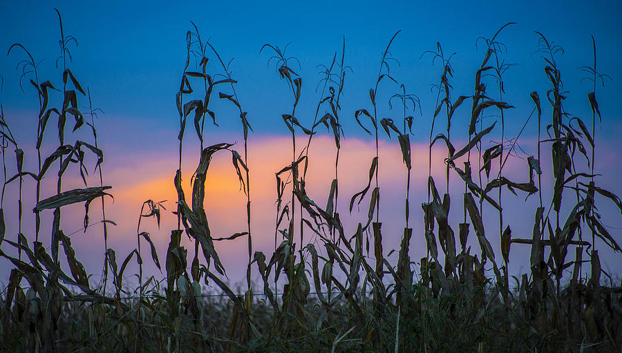 Amish Photograph - Amish End Of Harvest by Bruce Neumann