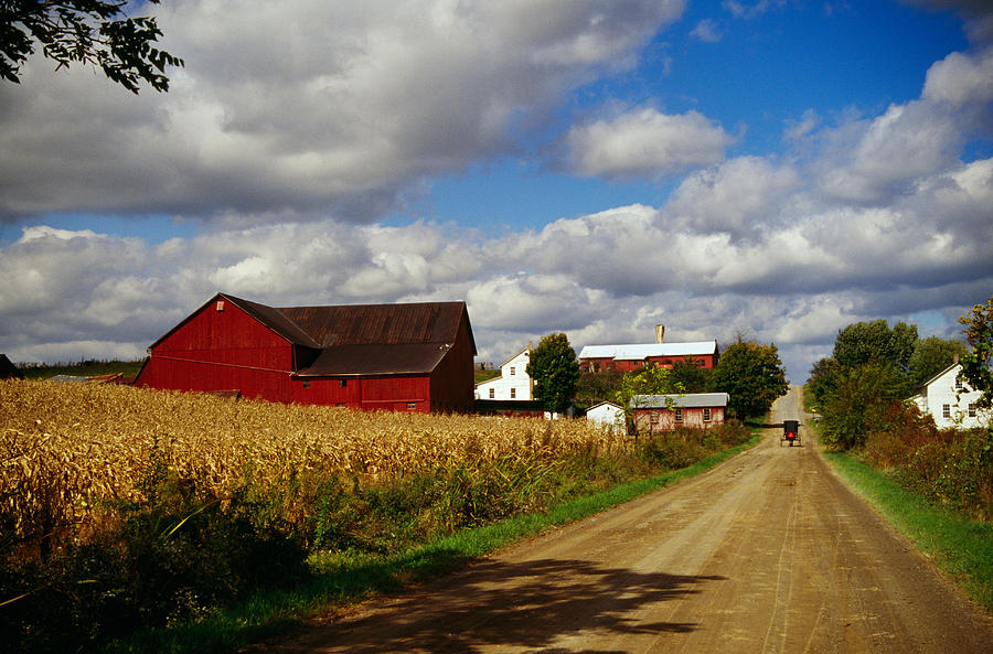 Amish Farm Buildings And Corn Field Photograph By
