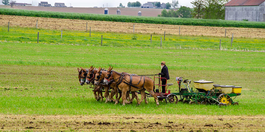 Agricultural Photograph - Amish Farmer by Guy Whiteley
