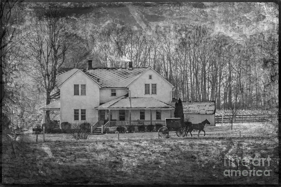 Amish Horse And Buggy Winter 2013 Photograph