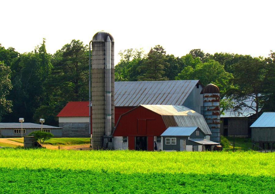 Farm Silo Barn Red Barn Red Barns Country Living Scenic Rustic Rural Feilds Stalls  Plants Garden Amish Crops Nature Veiw Old Historic Farms Nature Plants Planting Farming Green Grass Trees Amish Living Pasture Maryland Trish Clark Photograph - Amish Life by Trish Clark