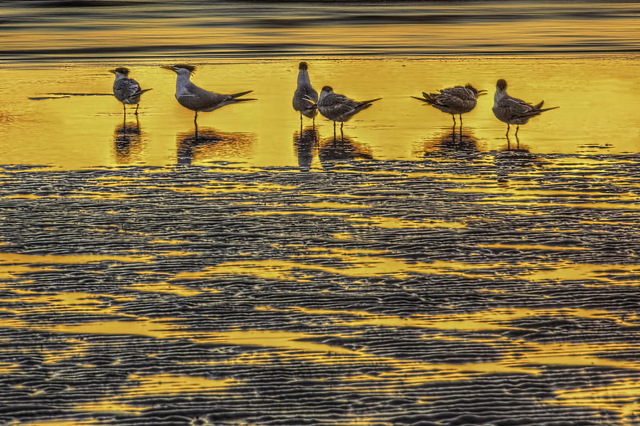 Royal Terns Photograph - Among Friends by Marvin Spates