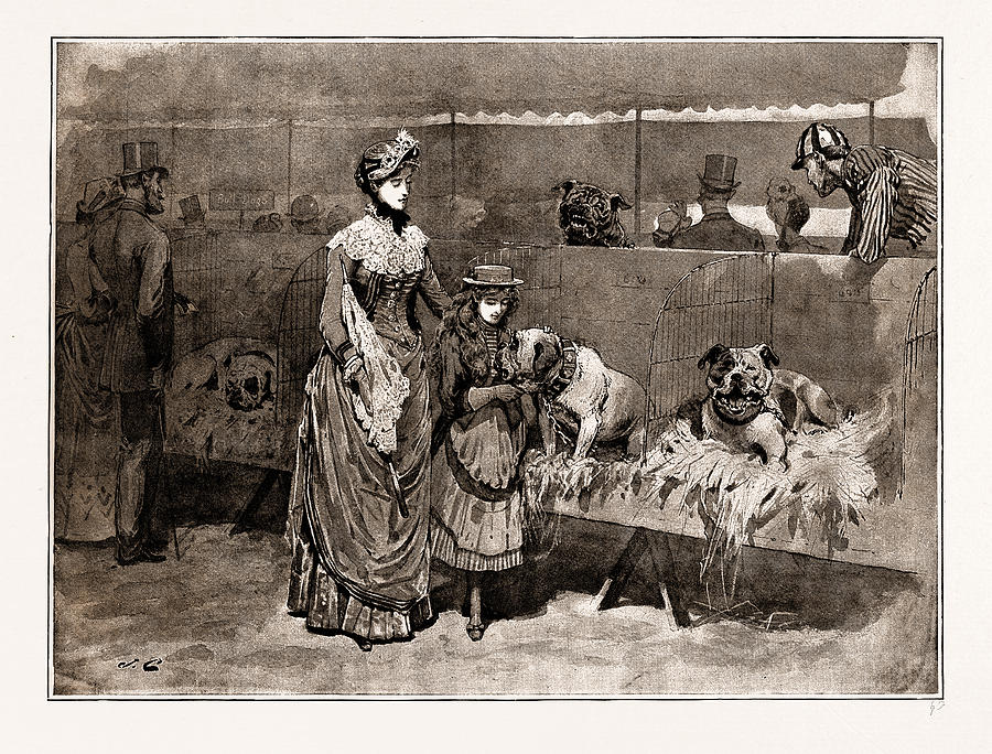 Bull Drawing - Among The Bull Dogs At The Kennel Club Show by Litz Collection