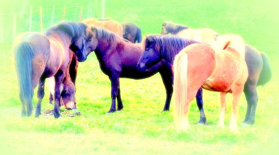 Soul Photograph - A Horse Most Of All Wanna Be One Among The Other Horses by Hilde Widerberg