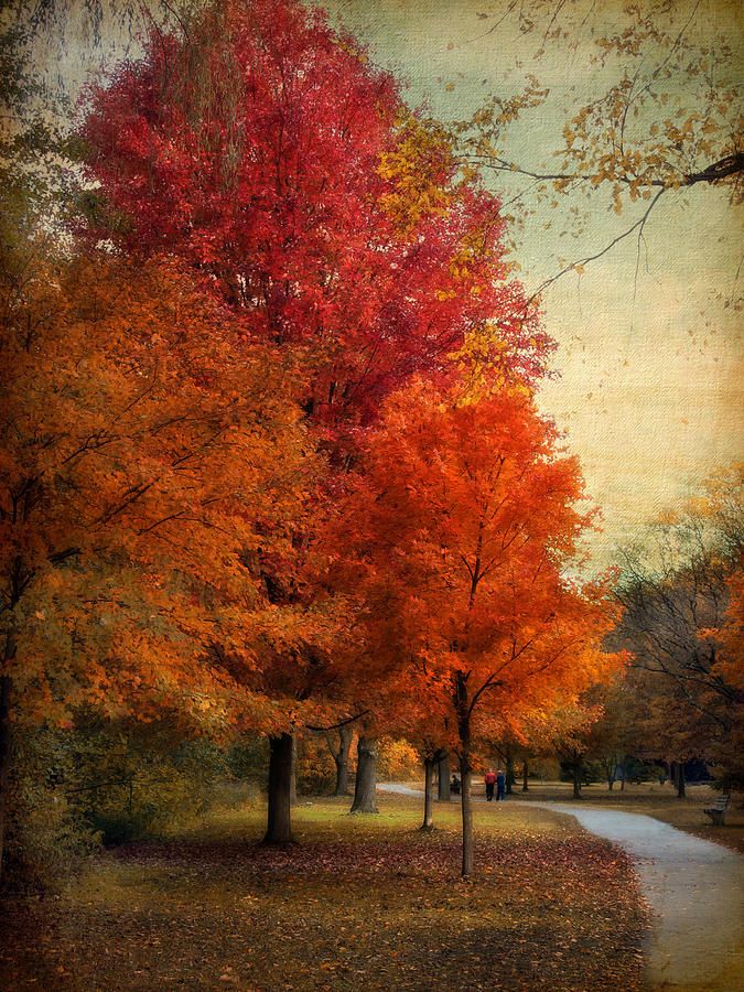 Autumn Photograph - Among The Maples by Jessica Jenney