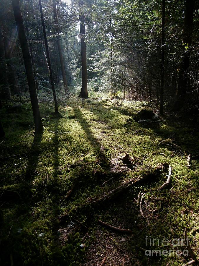 Moss Photograph - Among The Moss by Steven Valkenberg