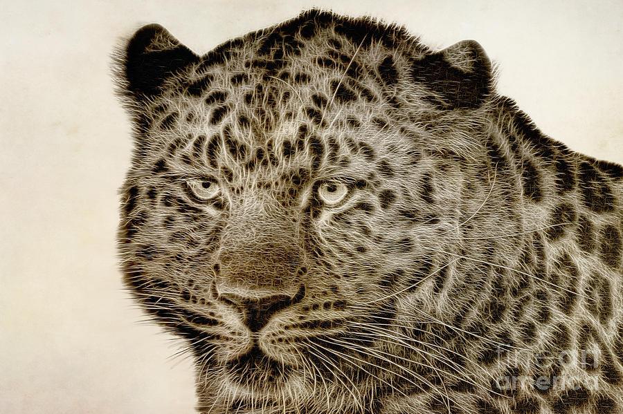 Panthera Pardus Orientalis Painting - Amur Leopard by John Edwards