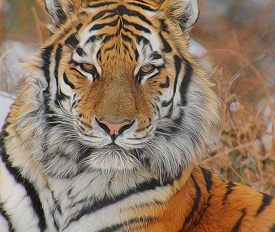 Tiger Photograph - Amur Tiger Magnificence by Diane Alexander