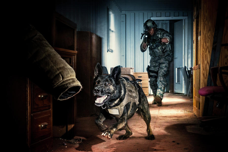 Attack Photograph - An Air Force Security Forces K-9 by Stacy Pearsall