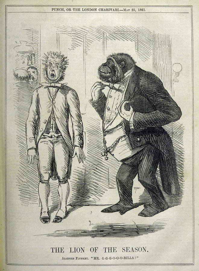 Lion Drawing - An Alarmed Flunkey Introduces  Mr by Mary Evans Picture Library
