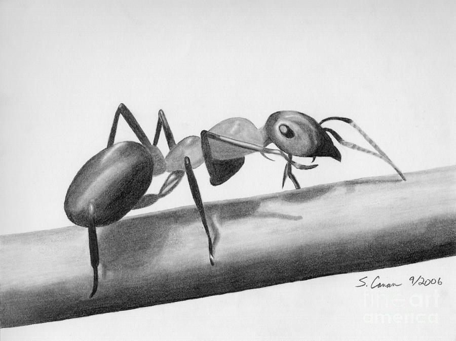 картинка муравьи с карандашами