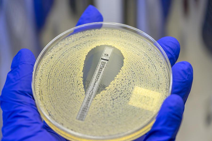 An antibiotic sensitivity plate of an MRSA bacteria showing sensitivity to antibiotic Vancomycin Photograph by Rodolfo Parulan Jr.