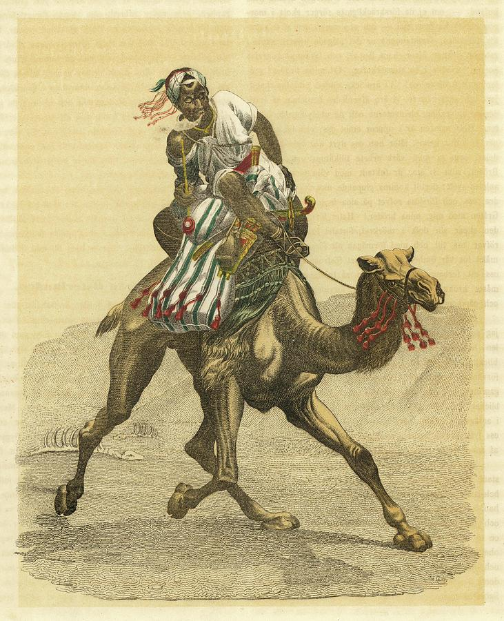 An Arab On His Camel, Riding