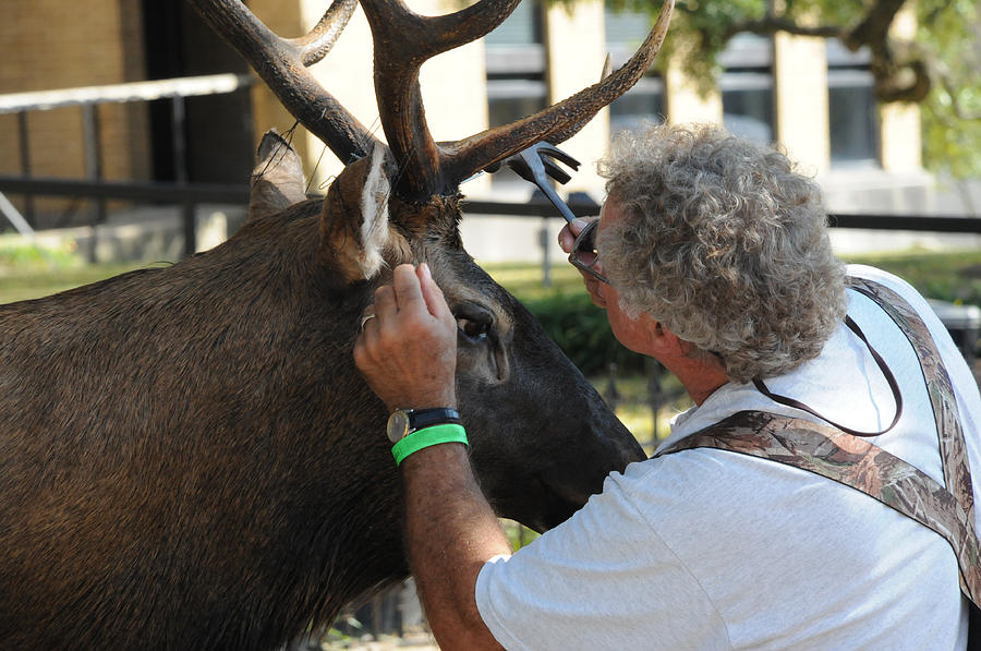 Deer Photograph - An Artist by Leon Hollins III