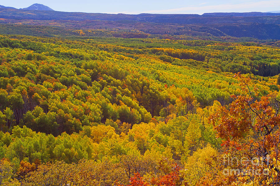 Autumn Colors Photograph - An Autumn Carpet by Jim Garrison