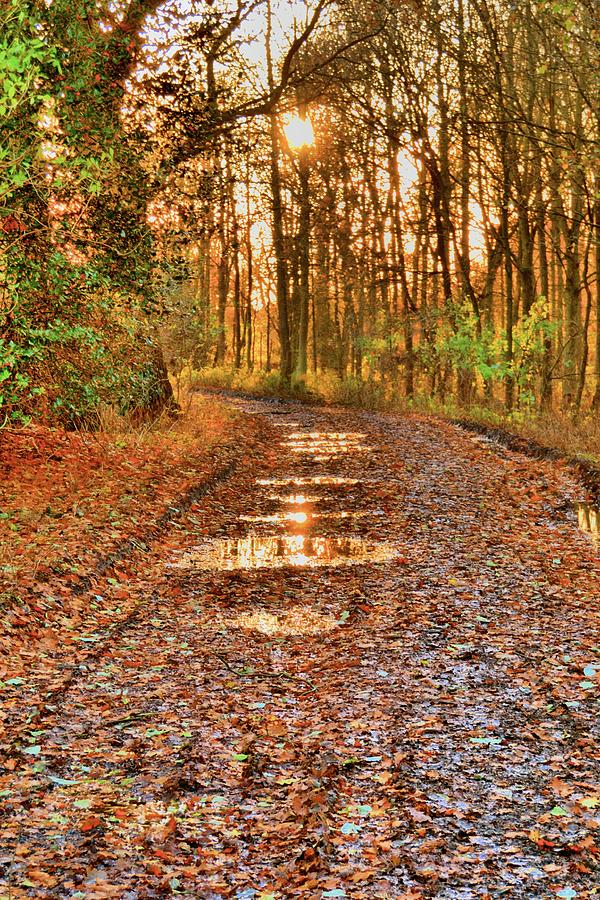 Sunset Photograph - An Autumn Track by Dave Woodbridge
