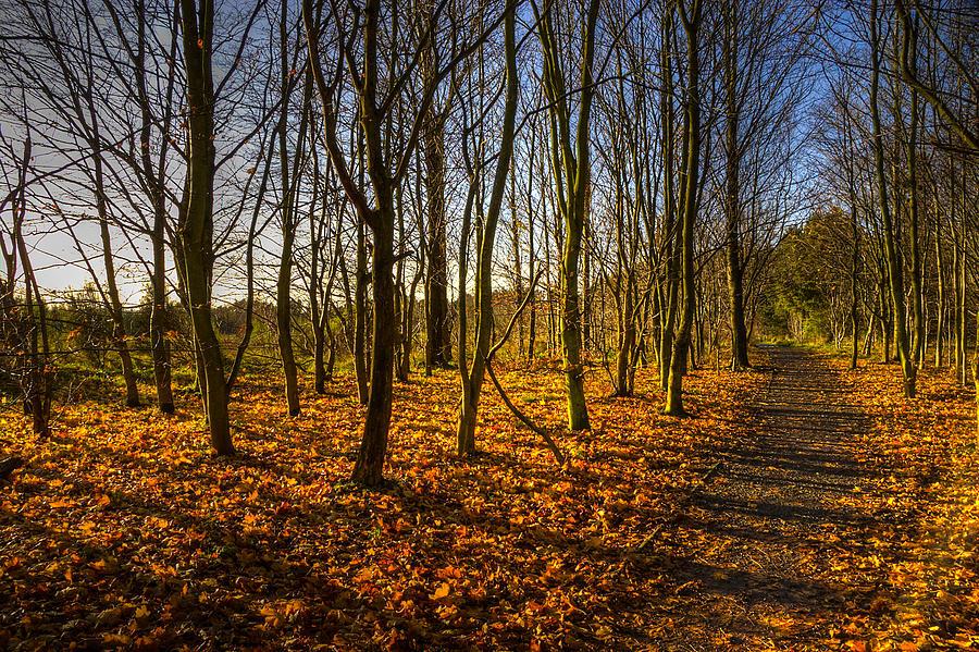 Autumn Photograph - An Autumn Walk by Ross G Strachan