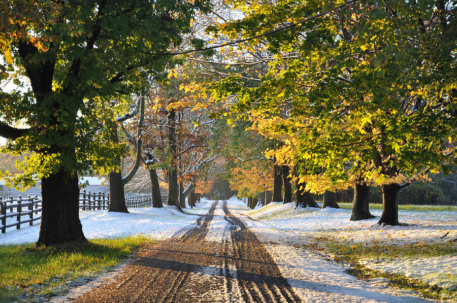 An Early Winter Photograph by Bill Cannon