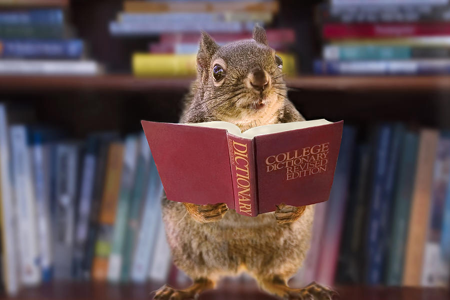Squirrel Photograph - An Educated Squirrel by Peggy Collins