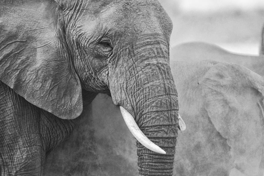Sand Photograph - An Elephant Never Forgets by Paul W Sharpe Aka Wizard of Wonders