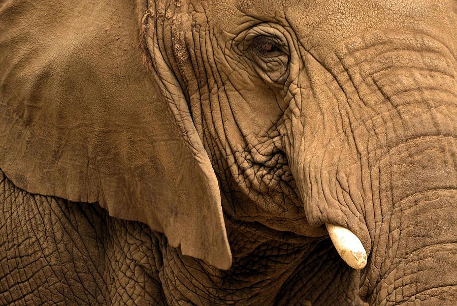 Elephant Photograph - An Elephants Eye by Nadalyn Larsen