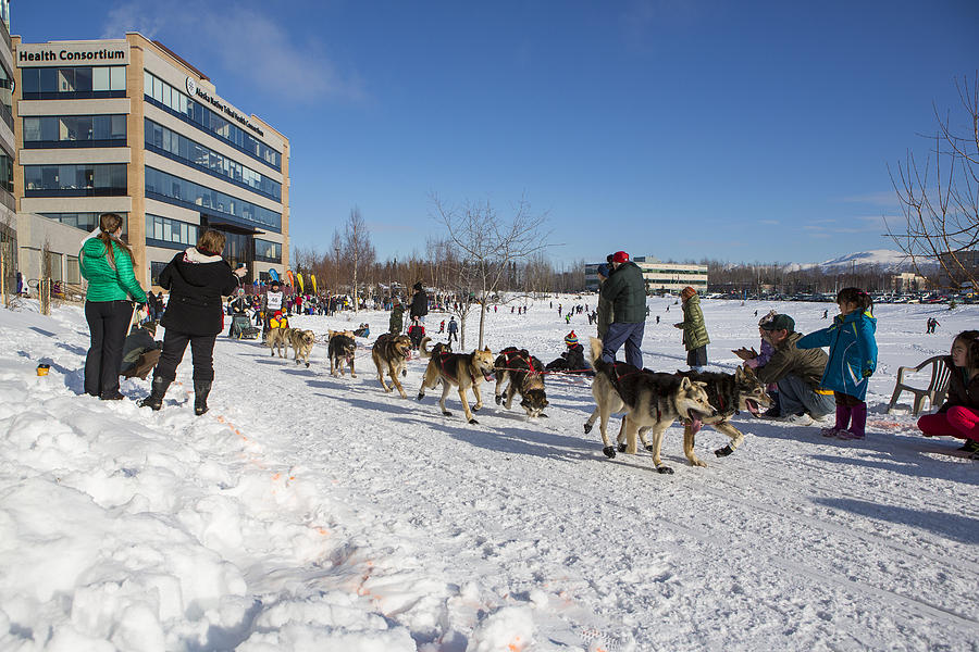 Alaska Photograph - An Iditarod Racer In Anchorage by Tim Grams