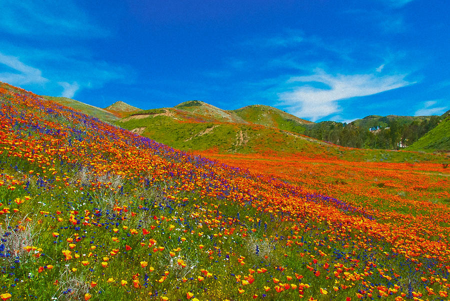 Poppies Photograph - An Ocean Of Orange  by Lynn Bauer
